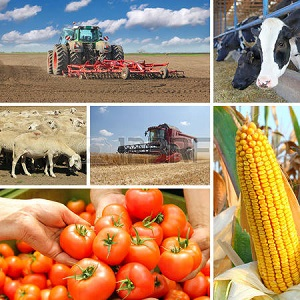 "XIX International Scientific and Practical Conference ""Current trends of agricultural industry in global economy"""